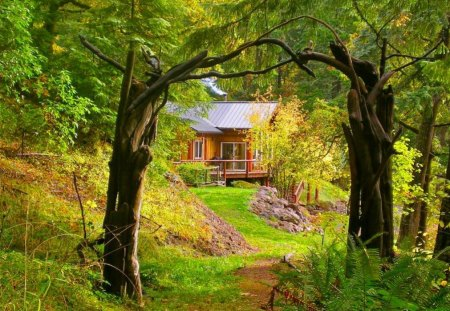 Forest House Forests Amp Nature Background Wallpapers On