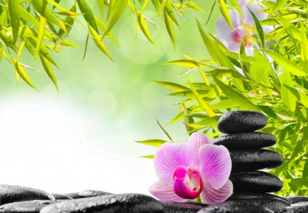 spa treatment wallpaper - photo #27