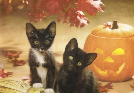 halloween kittens cats amp animals background wallpapers