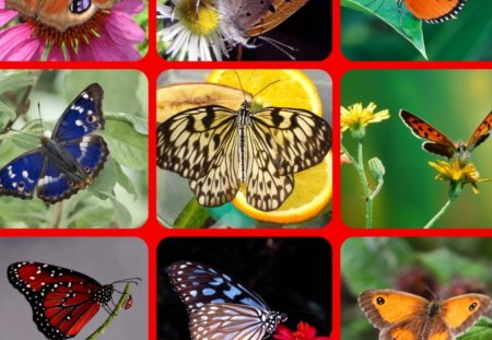 BUTTERFLIES FOR CHERIE - Collages & Abstract Background Wallpapers on Desktop Nexus (Image 1162758)