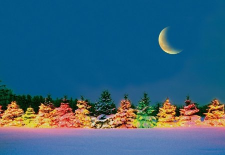 39 Outdoor Christmas Trees 39 Winter Nature Background