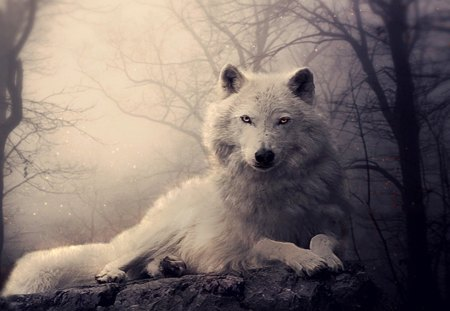 white wolf waiting - O...