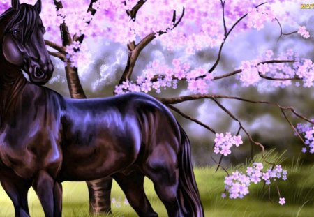 spring wild horse wallpaper - photo #34
