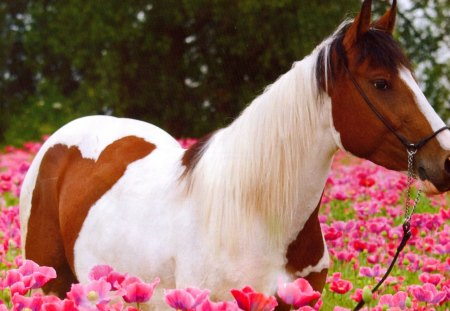 horses and flowers wallpaper - photo #9