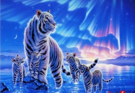 White Tiger Family - Fantasy & Abstract Background ... Cute Siberian Tiger Cubs