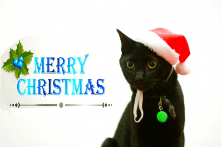 MERRY CHRISTMAS  Cats &amp Animals Background Wallpapers On