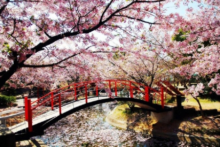 spring in japan other nature background wallpapers on