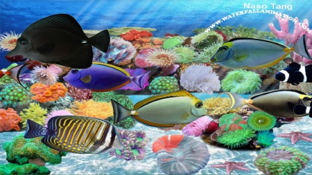 naso tang aquarium coral reefs nature background wallpapers on desktop nexus image 1682433. Black Bedroom Furniture Sets. Home Design Ideas