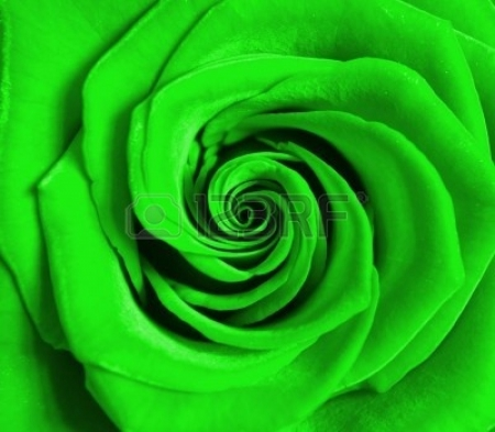 lovely green rose flowers nature background wallpapers. Black Bedroom Furniture Sets. Home Design Ideas