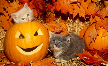 Thanksgiving Names For Cats