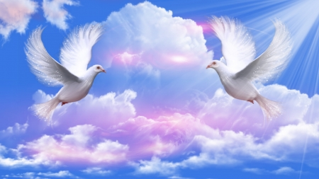 Doves Peace  Sky &amp Nature Background Wallpapers On