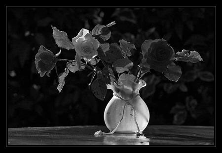 black and white still life flowers amp nature background