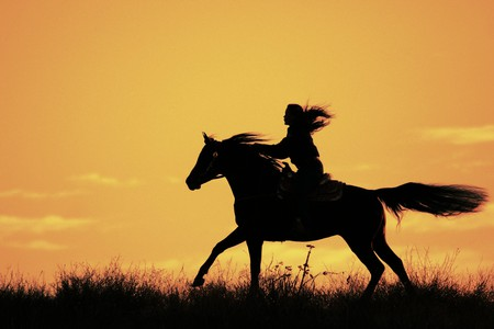 sunset ride horses amp animals background wallpapers on