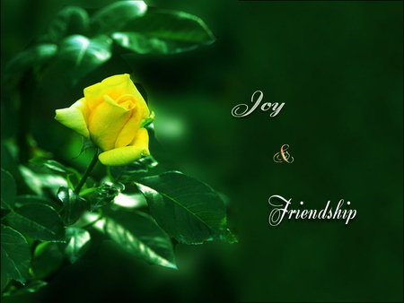 Yellow rose flowers nature background wallpapers on desktop nexus image 721372 - Flowers that mean friendship ...