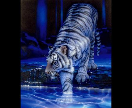 Cool Cat - 3D and CG & Abstract Background Wallpapers on ...
