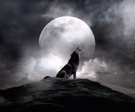 moon_wolf - animal, wolf, moon, night, dog, 3d