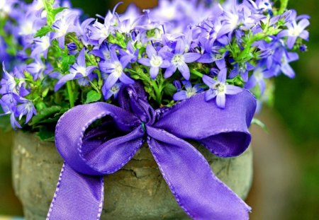 Flowers with ribbon - blue, delicate, nice, harmony, ribbon, lovely, beautiful, flowers, bouquet, pretty, bunch