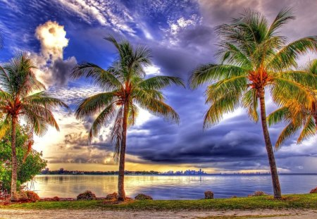 Tropics - tropical, summer, sky, tropics, beach, golden, palms, palm trees, clouds, sunny, sea, wind, sun, nature, ocean