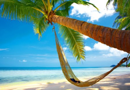 Tropical hammock - Beaches & Nature Background Wallpapers ...