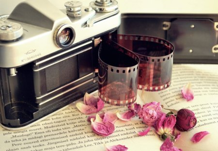 Love Photography - petal, love, film