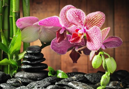 Pink orchid - flowers, beautiful, pink, pretty, lovely, leaves, nice, still life, orchid, stones