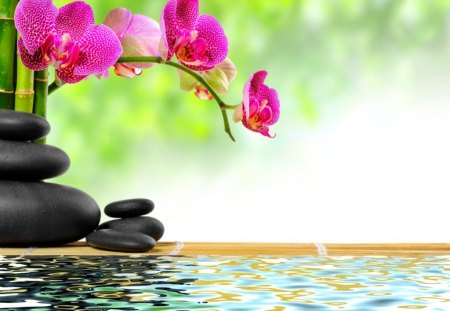Zen stones and bamboo - green, zen, flowers, summer, beautiful, reflection, water, spa, orchids, stones, bamboo