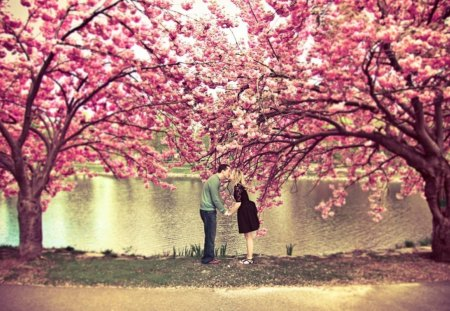 Kiss of life - pink, nature, life, tree, kiss