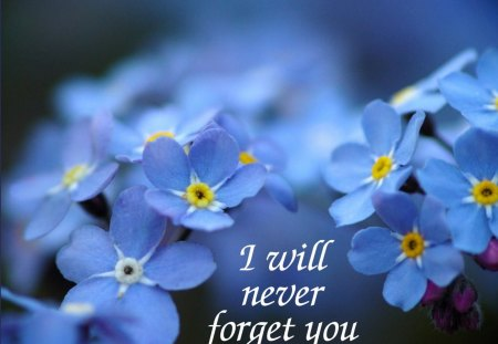 Message for MICHAEL♥ - flowers, message, floral, blue, forever