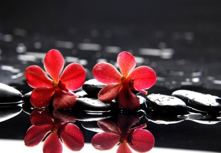 Red flowers on stones - flowers, black, reflection, pretty, lovely, water, nice, wet, still life, spa, red, stones