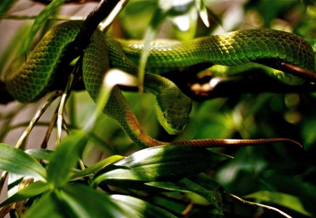 snake - leaves, snake, green