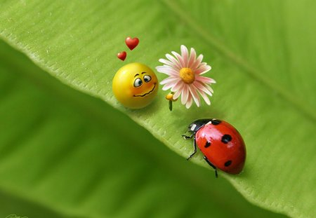 True Love :) - flower, lady bug, smile, love, hearts