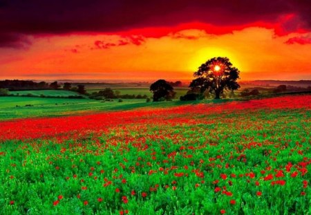 Beutiful beutiful sunset view - forces of nature & nature background
