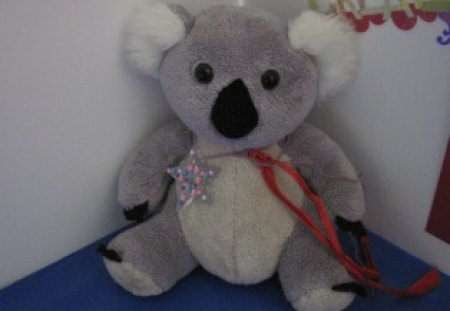 Koala The Star - star, black, white, grey, blue, red, koala
