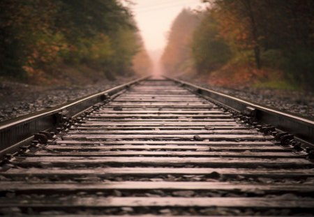 Train Track - track, train, railway, photo