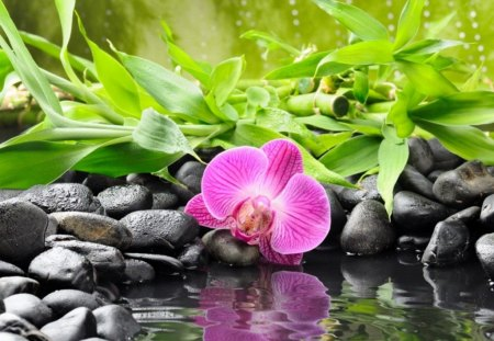 Pink flower reflection - grass, lake, water, pink, summer, flower, beautiful, reflection, stones, pond, green, leaves