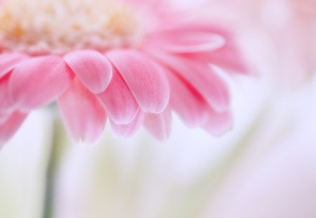 Pretty pink - Flowers & Nature Background Wallpapers on ...
