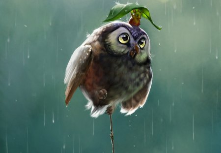 Owl and mouse on a rainy day - cute, rain, owl, mouse