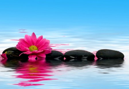 Pink flower reflection - beautiful, colorful, mirrored, reflection, pink, blue, pretty, lovely, flower, nice, spa, stones