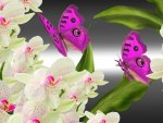 Orchids Butterflies Bright
