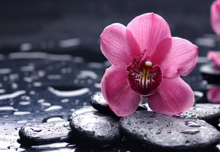 Spa still life - flowers, beautiful, pink, pretty, lovely, water, nice, wet, still life, spa, stones