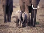 Holding Trunks...