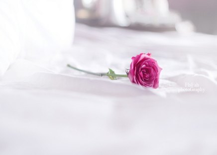 Alone - day, romantic pink, alone, rose, one, special