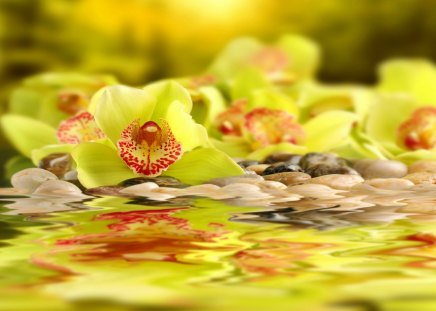 Sunny spa flowers - flowers, beautiful, reflection, treatment, pretty, harmony, beauty, yellow, water, spa, stones, rays, lovely, golden, light, wet, still life, sunny, shine