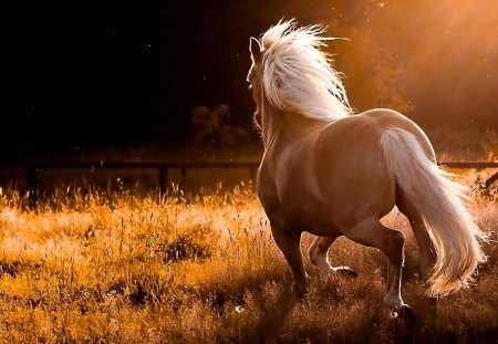 Running Horse - landscape, horse, wild, galopping, grass, nature