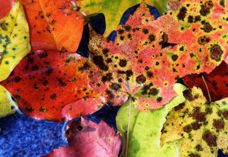 Leaf Assortment - colors, leaf, assortment, fall