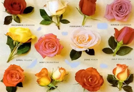 For each month - months, year, roses, colors, twelve