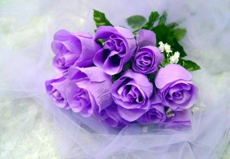 Purple beauties for Purple-Haze - green, flowers, purple, roses, blue, bouquet
