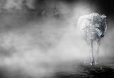 LONELY WOLF in the MIST - mist, flower, lonely, wolf