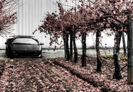 lambroghini diablo by cherry trees - leaves, trees, car, building