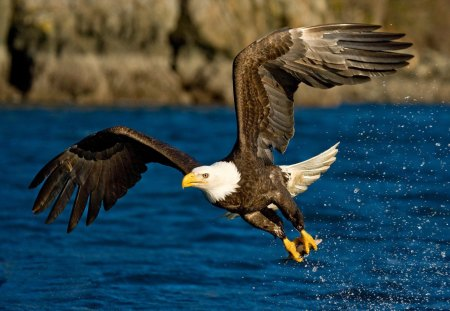 Eagle - wings, talons, eagle, flying